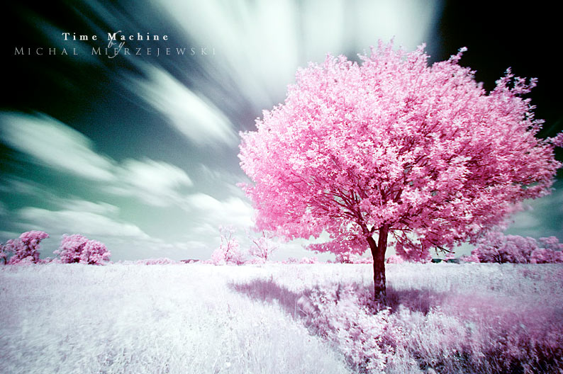 50 Most Beautiful Trees – Photography