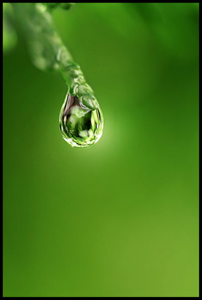 beautiful dew drop