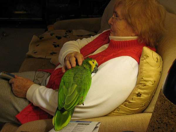 Parrot sleeping with grand maa