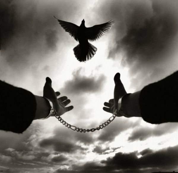 Pigeon Freedom