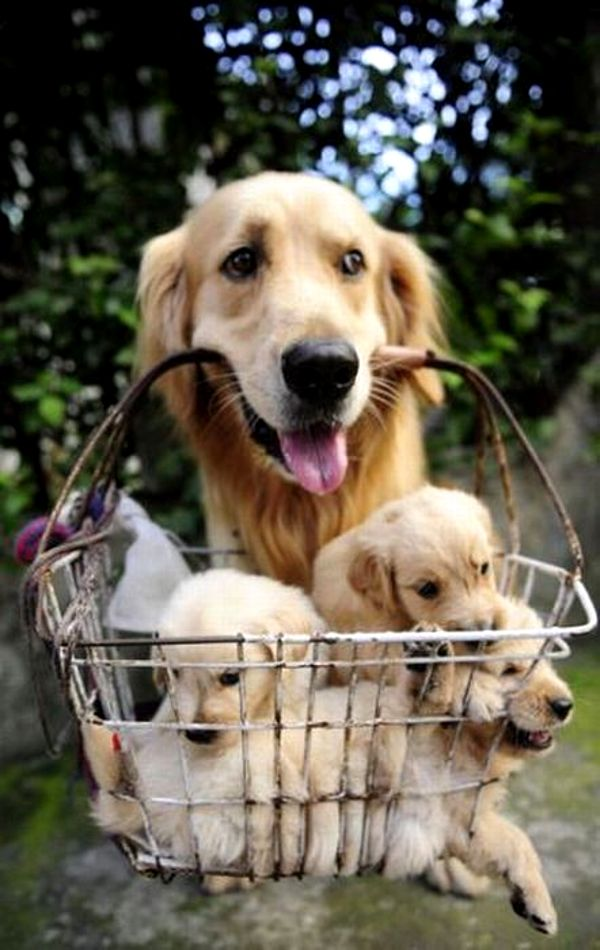 working mom carrying puppies