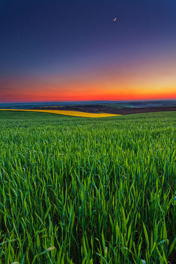 Picture perfect corn fields at twilight time.