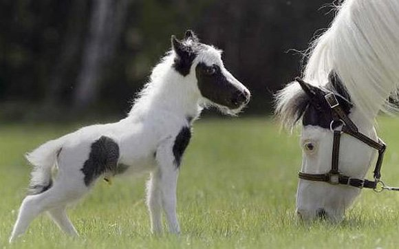 An adorable baby horse